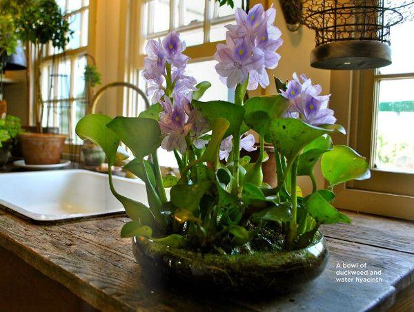 Indoor Water Loving Plants