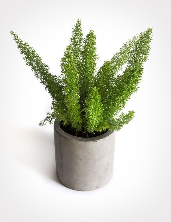 Lucky Plants For Dark Bedroom No Light