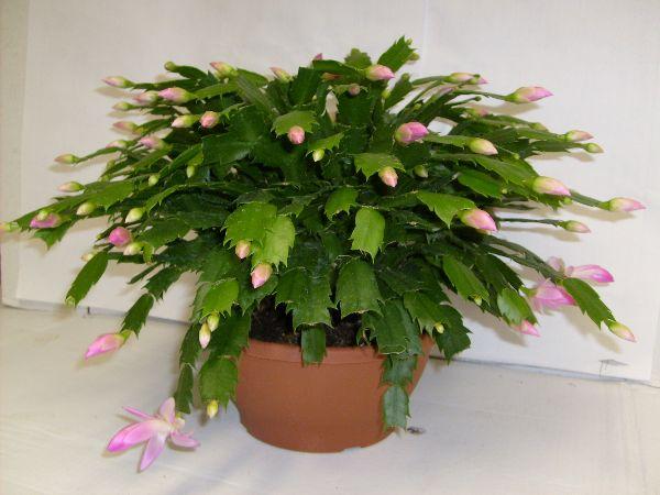 Plants Ideal For Dark Bedroom