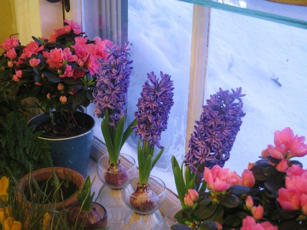 Indoor Gardening Winter Ideas