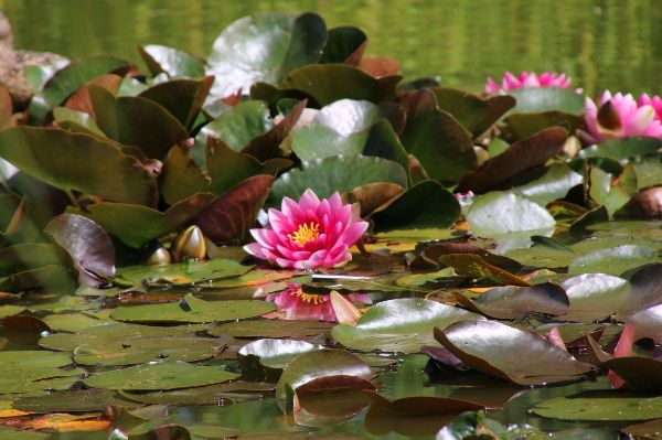Water Loving Plants For Pond