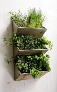 Basin Indoor Gardening Ideas