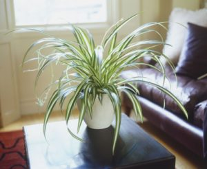 Best House Plants Low Light