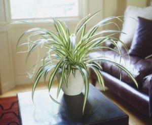 Best House Plants Low Light