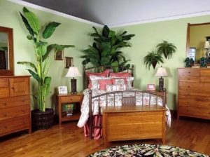 Best Lucky Plants For Bedroom