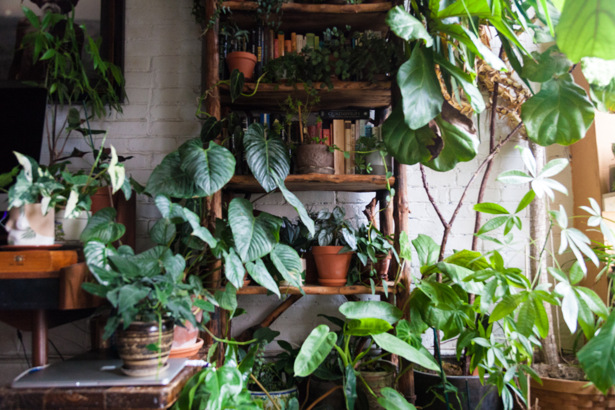 House Plants: Which of these 30 Best House Plants should You get? on cane plants types u s, mass cane plant, ruby jade plant, sugar cane plant, cane plant care, blue shade plant, cane tree, cane coffee table, pandan plant, ornamental cane plant, butterfly palm plant, dracaena janet craig plant, dragon palm plant, lucky palm plant, corn cane plant, sago palm house plant, dracaena fragrans massangeana corn plant, lisa cane plant, repotting a corn plant,