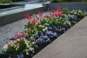 Cut Flower Garden Banks
