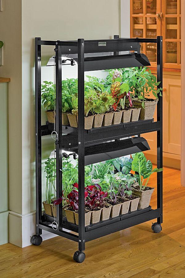 Reddit Indoor Container Gardening