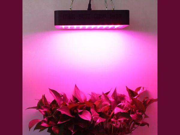 Reddit Indoor Gardening Ideas