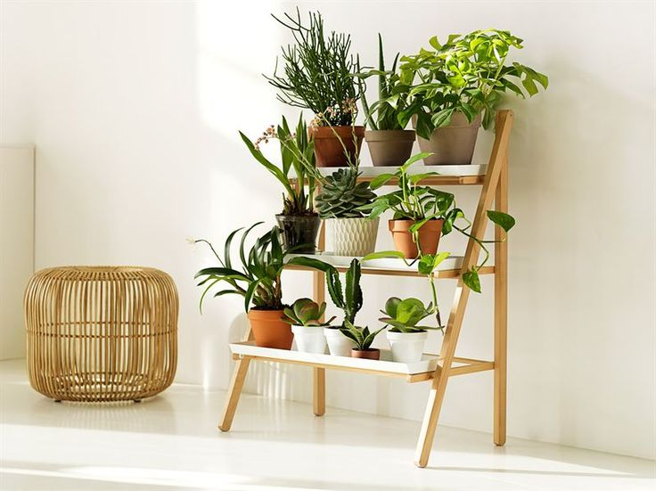 21+ Best Indoor Gardening Ideas for Beginners and Advanced