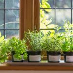 21+ Best Indoor Gardening Ideas for Beginners and Advanced Gardeners [2018]