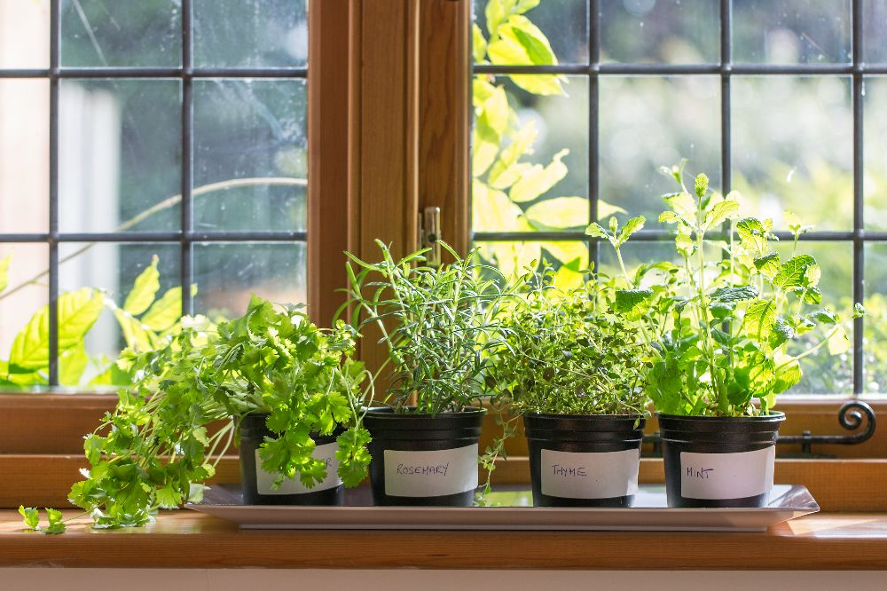 21 Best Indoor Gardening Ideas For Beginners And Advanced Gardeners 2018