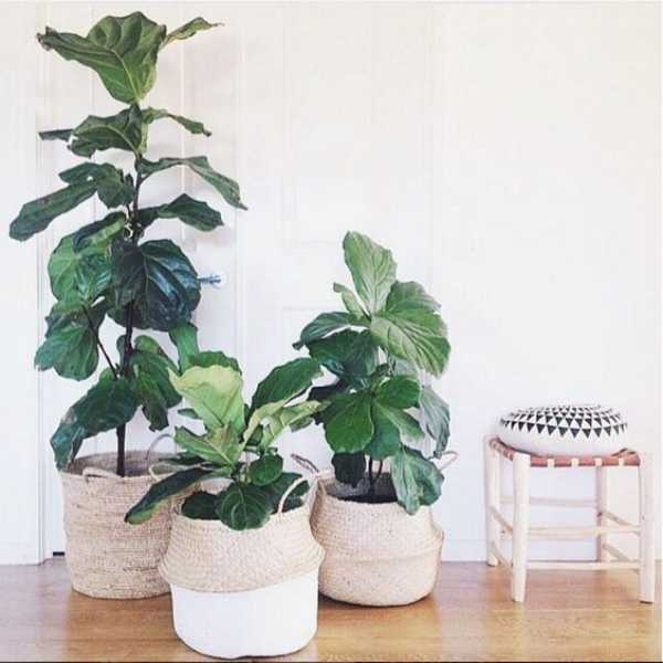 Plant Pots Extra Large