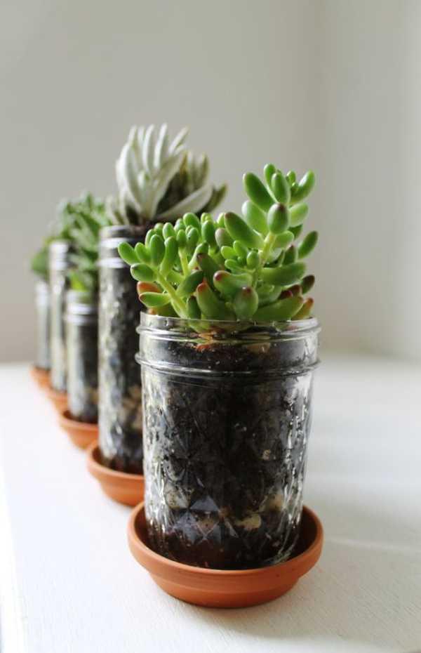 Plant Pots Holders