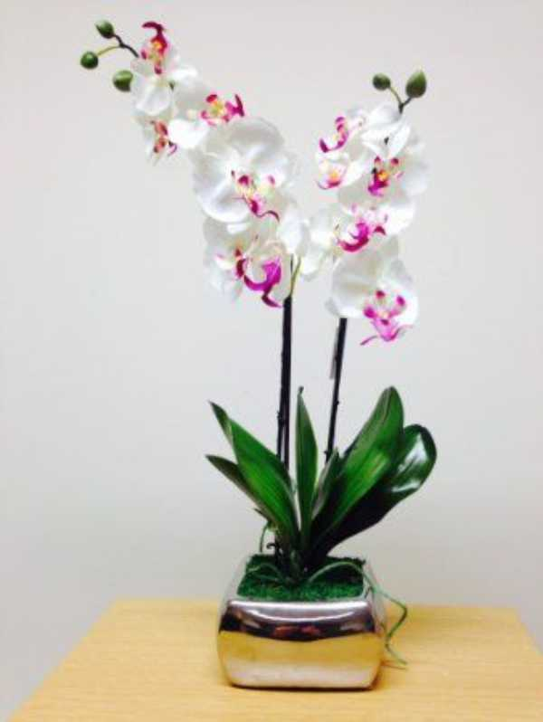 Plant Pots Indoor Decorative