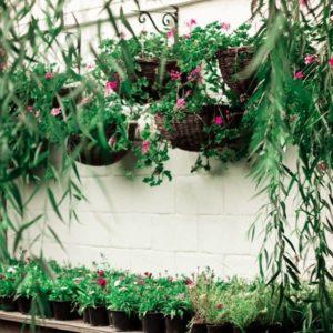 Balcony Plant Pots