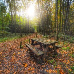 Best Garden Picnic Benches