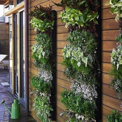 Best Vertical Gardening Ideas