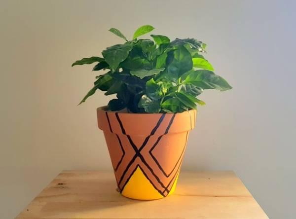 Plant Pots Clay