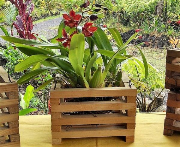 Plant Pots For Orchids