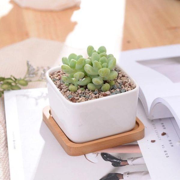 Plant Pots Square
