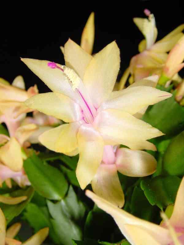 Succulent Plant For Sale