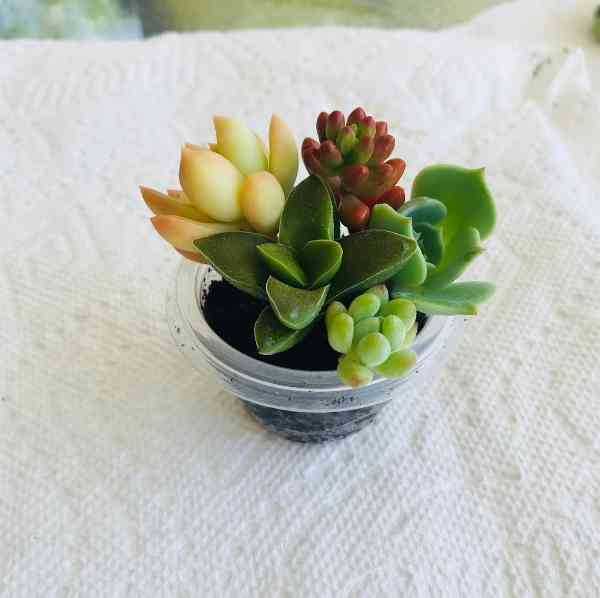 Succulent Plants Names