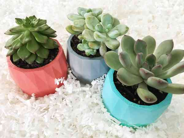Succulent Plants Near Me
