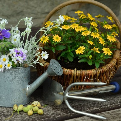 10 Best Gardening Hoes Reviewed [2019]