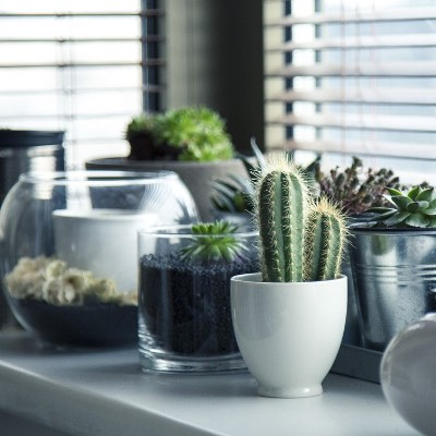 11 Best Indoor Plants To Destress You
