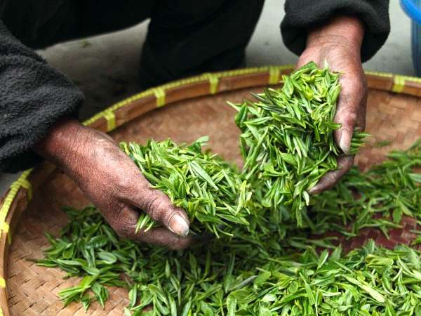 Drying Tea Leaves