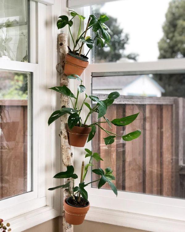 plant stand window