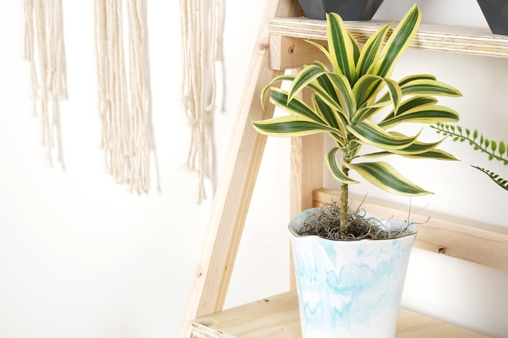 plant stand with a dracaena plant