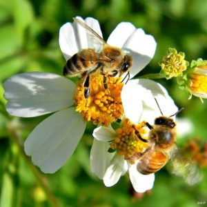12 Flowers To Plant For Bees