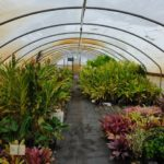 advantages of a greenhouse