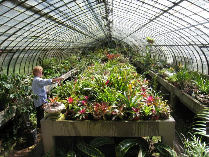 gardening inside a greenhouse