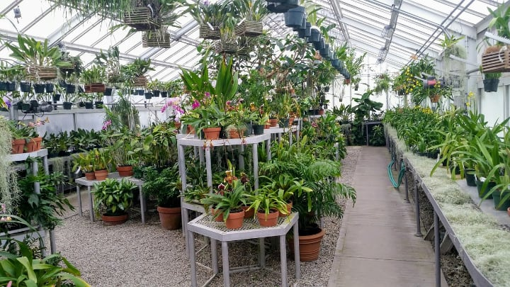 greenhouse for ornamental plant