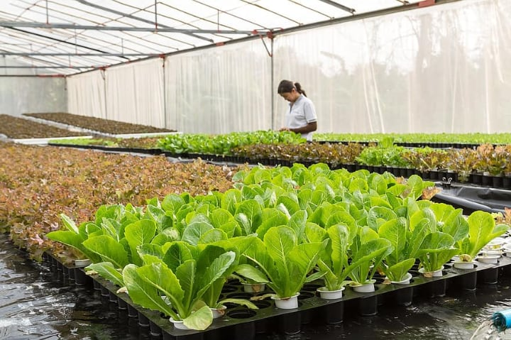increased production in a greenhouse