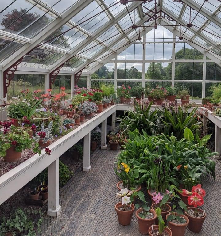 inside a greenshouse
