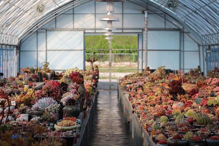 portable garden greenhouse