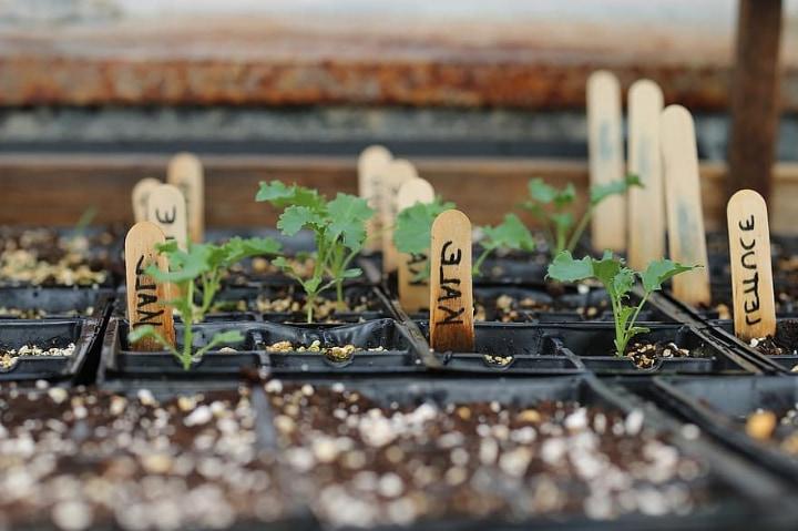 varieties of greenhouse plants