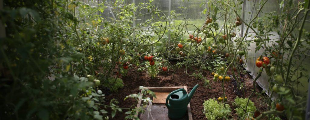 vegetable green house