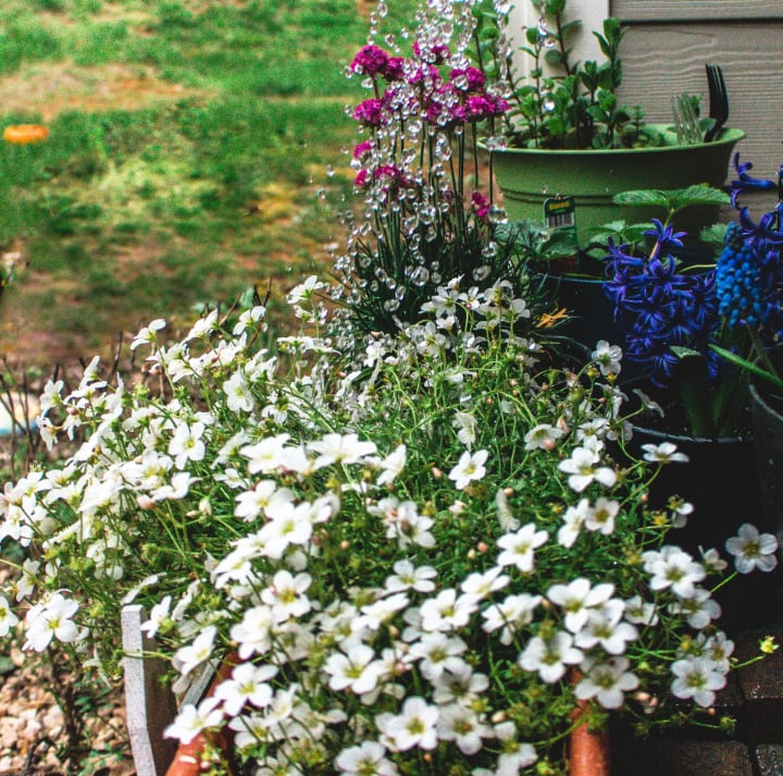grow flowers for bees at home