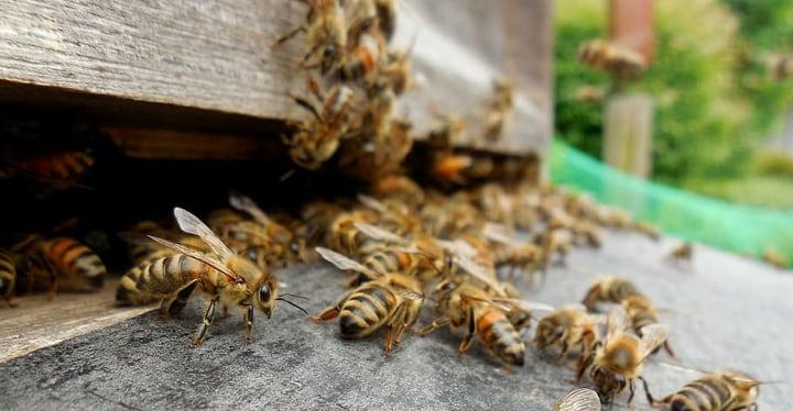 undisturbed bees house