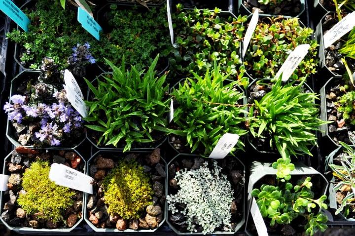 best plants for fairy garden