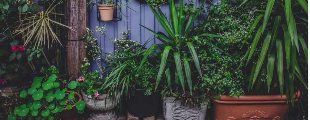 destressing indoor plants you need