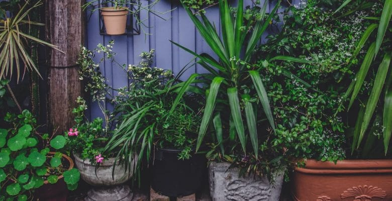 destressing indoor plants you need