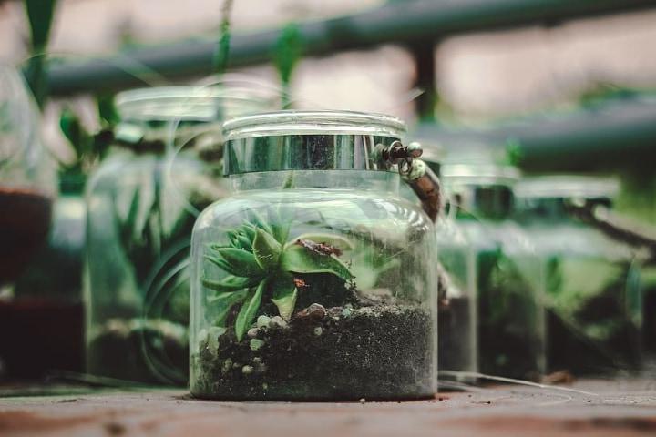 fairy garden terrarium container