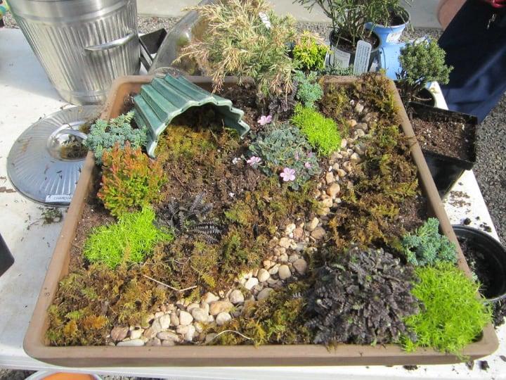 fairy garden with plants pebbles