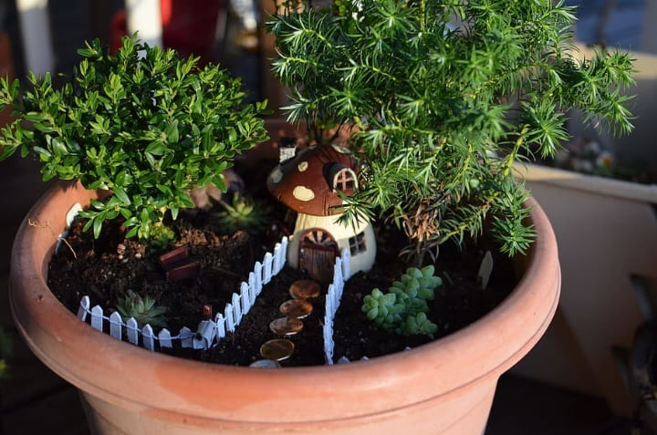 fairy house pot with potting mix